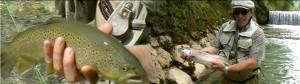 Fliegenfischen in der weißen Traun, Hans mit großen Forellen