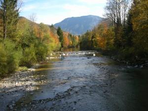 Blick von der Brücke in Bibelöd auf die weiße Traun im Herbst