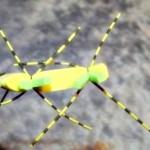 Tschernobyl Ant