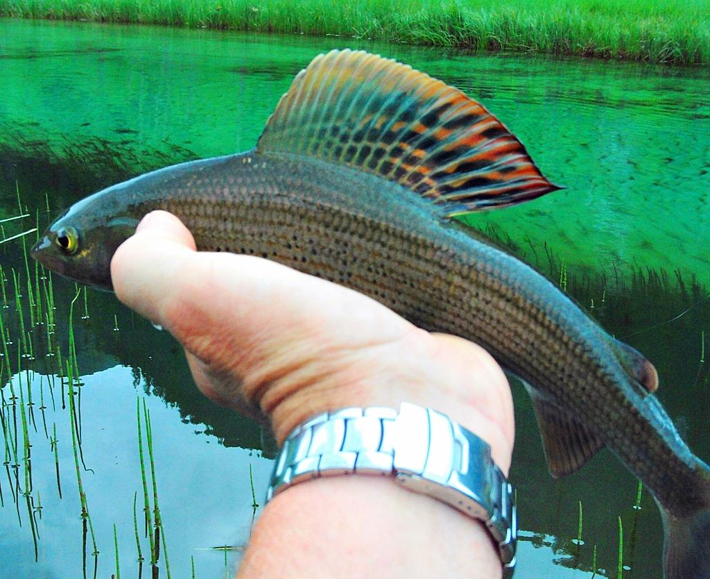 Fliegenfischen in der Großarler Ache